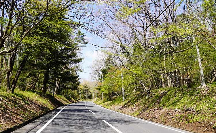 富士霊園林道